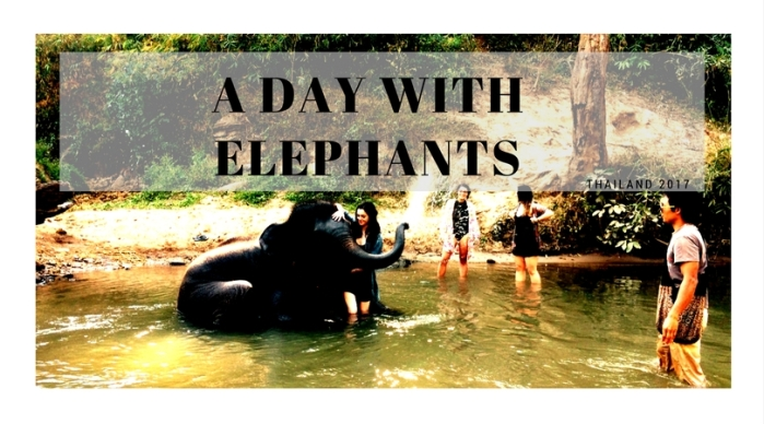 A day withElephants